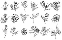 Flowers and branches hand drawn collection isolated on white background. 18 Floral graphic elements. Big vector set. Outline. Collection stock illustration
