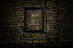 Flowers in the brick wall Stock Image