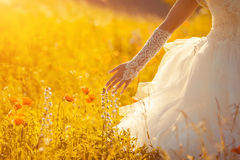 Flowers and the bride palm in the field. Lit evening sun Stock Photo