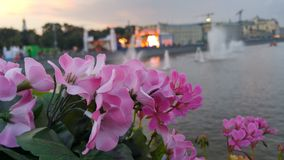 Flowers on the bridge in Moscow Stock Photography