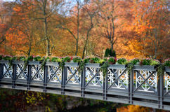 Flowers on the bridge . Nature in autumn Stock Images