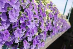 Flowers on bridge near Orebro castle Royalty Free Stock Photo
