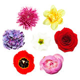 Flowers. Bright Colorful Set of Flowers Stock Photo