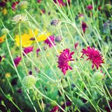 Flowers. Bright flowers in the meadow Stock Images