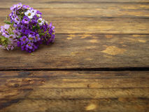 Flowers bright perspective. Flower composition. Autumn. Composition Royalty Free Stock Image