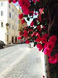 Flowers brighten the streets of Rome. Cobblestoned street in Rome, Italy stock photo