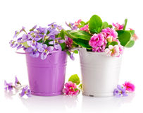 Flowers in bucket with green leaves Royalty Free Stock Images
