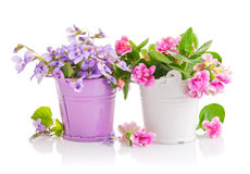 Flowers in bucket with green leaves Stock Photography