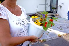 Flowers in a bucket held by a woman. Flowers in a white bucket held by a woman Royalty Free Stock Photos