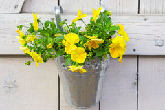 Flowers in bucket Stock Photography