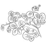 Flowers with bud outline sketch vector Royalty Free Stock Image
