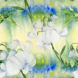 Flowers, buds, branches of sweet pea. Decorative composition on a watercolor background. Watercolor. Floral motifs. Seamless patte Royalty Free Stock Photo