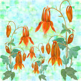 Flowers, buds and leaves - drawing by watercolor. Aquilegia.Watercolor background. Abstract wallpaper with flor Stock Photography