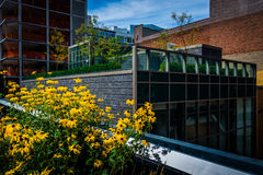 Flowers and buildings along The High Line in Manhattan, New York stock image