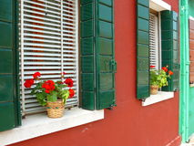 Flowers in Burano Royalty Free Stock Images