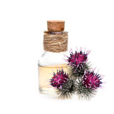 Flowers burdock and burdock oil. On a white background royalty free stock photography