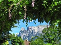 Flowers and bush with mountains in the background in Bolzano, Italy royalty free stock images