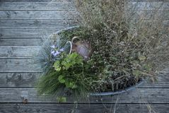 Flowers and bushes in a tin pan from above on wooden floorboards stock images