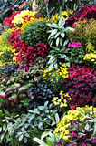 Flowers in butchart gardens Royalty Free Stock Images