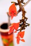 Flowers of Butea monosperma stock photography