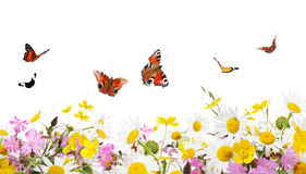 Flowers and butterflies Stock Photos