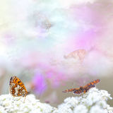 Flowers with butterflies Stock Image