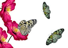 Flowers and butterflies. Composition from flowers and butterflies on a white background vector illustration