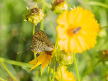 Flowers and butterflies. The butterfly is famous for its beautiful colour and graceful dancing posture. General colorful butterfly wings, there are all sorts of Stock Photography