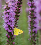 Flowers and butterflies. The butterfly is famous for its beautiful colour and graceful dancing posture. General colorful butterfly wings, there are all sorts of Royalty Free Stock Image