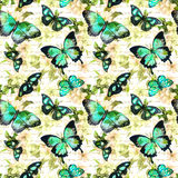 Flowers, butterflies, hand written text note. Watercolor. Seamless pattern Stock Photography