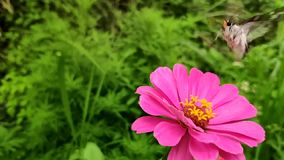Flowers and butterflies stock video footage