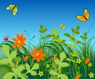 Flowers and butterfly. Flowers, grass, butterfly on a blue background Royalty Free Stock Images