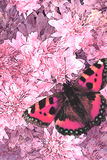 Flowers and Butterfly. Decorative image from an original 12x18 illustration of spring time. / AW-006 Royalty Free Stock Photos