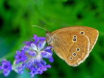Flowers and butterfly Stock Photography