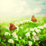 Flowers and butterfly on meadow Stock Image