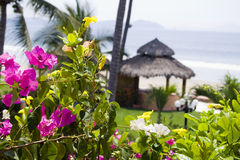 Flowers cabana. Beautiful Cabana surrounded by flowers and ocean Stock Images