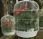 Flowers in cages. Representation of the lack of freedom of the birds introducing flowers Stock Images