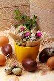 Flowers Calandiva and quail eggs. Chocolate eggs and quail eggs with flowers Calandiva on a plane fir-wood Stock Photo