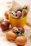 Flowers Calandiva and quail eggs. Chocolate eggs and quail eggs with flowers Calandiva on a plane fir-wood Stock Photography