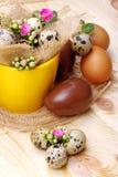 Flowers Calandiva and quail eggs. Chocolate eggs and quail eggs with flowers Calandiva on a plane fir-wood Stock Photos