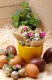 Flowers Calandiva and quail eggs. Chocolate eggs and quail eggs with flowers Calandiva on a plane fir-wood Royalty Free Stock Image