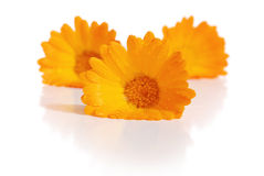 The flowers of a calendula Royalty Free Stock Photo