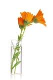 The flowers of a calendula Stock Photo