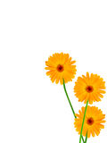 Flowers  camomiles  yellow Stock Image