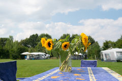 Flowers at campsite. Bunch sunflowers in vase at campsite stock image