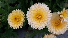 Flowers can brighten anyone& x27;s Day!. Summer blossom  flowers can brighten anyones day stock photo