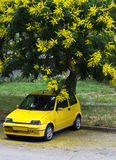 Flowers and car all in yellow. Yellow flowers  blooming and yellow car,all in yellow  color Stock Photo
