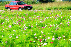 Flowers and car Stock Images
