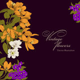 Flowers. Card. Vintage vector illustration.  Botany.  Spring flowers. Royalty Free Stock Photo