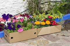 Flowers into cardboard boxes Royalty Free Stock Photos